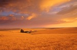 Golden wheat field and farm at sunset, Harvest Time, near Condon, Oregon, AGPix_0029