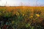 Tallgrass prairie at Bluestem Prairie Scientific and Natural Area, East of Moorehead, Minnesota, AGPix_0086
