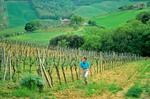 Walker follows footpath through vineyard, near San Gimignano, Tuscany, Italy, AGPix_0098