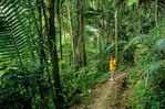 Hiker on Big Trees Trail in El Yunque Rainforest, Caribbean National Forest, Puerto Rico, AGPix_0117