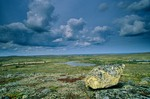 Erratic rock on tundra near Whitefish Lake in the Thelon Valley, Northwest Territories, Canada, AGPix_0128