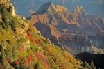 Brahma and Zoroaster Temples with Autumn Color, North Rim of Grand Canyon National Park, Arizona, AGPix_0152