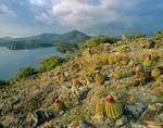 Turks cap cactus at Ram Head, Virgin Islands National Park, St. John, US Virgin Islands, AGPix_029