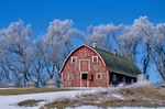Frosty trees and red barn, winter in the country, north of Hubbard, Iowa, AGPix_0243