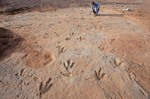 Paleontologist examins dinosaur tracks in Moenave Formation in the Painted Desert area of Ward Terrace, Navajo Indian Nation, Arizona, AGPix_0254