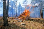 Burning slash piles after thinning of ponderosa pine forest, Coconino National Forest, Flagstaff, Arizona, AGPix_0279