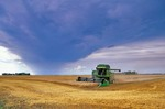 AGPix_0285; Tom Bean; Rain; Storm; Approaching; Field; Harvest; Farm; Casselton; North Dakota; Rain Storm Threatening Wheat Field; Farmer; Harvests; Crop; Combine; agriculture; farming; havesting; bounty; grain; clouds; weather; stormy; machinery; farm equipment; Great Plains; crops; ripe; golden; amber; occupations; workers; mechanized; American; agribusiness; rain; rainy; threat; hazard