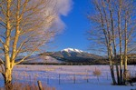 Humphreys Peak in winter, viewed from Kendrick Park along Highway 180, Coconino National Forest, north of Flagstaff, Arizona, AGPix_0305