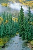West Dolores River, San Juan National Forest near Dolores, Colorado, AGPix_0312