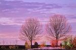 Christmas lights on deciduous trees, West Des Moines, Iowa, AGPix_0347