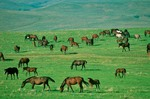 Horses graze on South Dakota prairie, Jones County, South Dakota, AGPix_0356