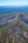 Aerial of the aftermath of Rodeo-Chediski Forest Fire showing mosaic pattern of burn, Apache-Sitgreaves National Forest, Arizona, AGPix_0367