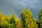 Rainbow over ponderosa pine forest after summer thunderstorm, Coconino National Forest, Flagstaff, Arizona, AGPix_0378    