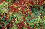 Colorful autumn roadside vegetation near Remigny, Burgundy, France, AGPix_0380