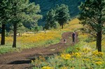 Woman walking with dog on forest service road on Saddle Mountain in Coconino National Forest, north of Flagstaff, Arizona, AGPix_0414