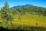 Woman walking in wildflower meadow, below San Francisco Peaks, Saddle Mountain, Coconino National Forest, north of Flagstaff, Arizona, AGPix_0415