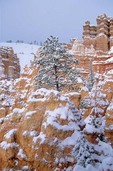Winter Snow at Bryce Canyon National Park, Utah, AGPix_0419