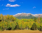 San Francisco Peaks with Fresh Snow Rise above Aspens in Autumn Color, AGPix_0478