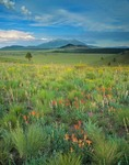 Wildflowers color grassland of Government Prairie, with San Francisco Peaks rising in distance, Kaibab National Forest, Arizona, AGPix_0480