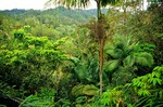 Rainforest vegetation at 4,500 feet in elevation in the Cordillera Central along trail to summit of Pico Duarte, Armando Bermudez National Park, Dominican Republic, AGPix_0522    