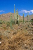 Hot and dry climate of June in the Sonoran Desert in White Tank Mountains Regional Park, Arizona, hot and dry time of year, June 27, 2005. Compare with image AGPix_ToBe7_0531 taken three months earlier in the same location to see a lush environment during spring, AGPix_0532