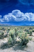 Sagebrush in the Pumice Valley with sumer thunderstorm forming in the desert east of the Sierra Nevadas, near Lee Vining; California, AGPix_0564
