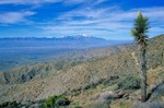 Joshua Tree at Keys View with snowy San Jacinto Peak in distance, Joshua Tree National Park, California, AGPix_0584