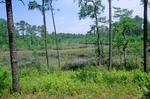 Swamp at Bayou Castelle in Mississippi Sandhill Crane National Wildlife Refuge, Gautier, Mississippi, AGPix_0635