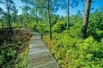 Boardwalk on Fly Trap Trail at Carolina Beach State Park, south of Wilmington, North Carolina, AGPix_0637