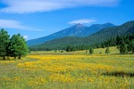 Flower filled meadow with San Francisco Peaks rising in background, summer in Flagstaff, Arizona, AGPix_0669