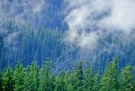 Temperate rainforest of Sitka Spruce and Western Hemlock growing on mountains of Tracy Arm Fords Terror Wildnerness, Tongass National Forest, Alaska, AGPix_0681
