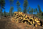 Ponderosa pine logs piled in log deck area after thinning of forest to achieve a presettlement tree density, Coconino National Forest near Flagstaff, Arizona, AGPix_0682