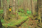 Woman walking among old growth hemlock trees growing in temperate rainforest near Point Adolphus on Chichagof Island in the Tongass National Forest west of Juneau, Alaska, AGPix_0688