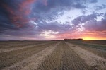 Sunset over wheat field with rows of swathed grain on near Casselton, North Dakota, AGPix_0699