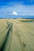 Great Kobuk Sand dunes with caribou tracks crossing the dunes at Kobuk Valley National Park, Alaska, AGPix_0705