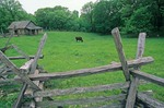 Iowa farm, circa 1850, with cattle in pasture at Living History Farms near Des Moines, Iowa, AGPix_0798
