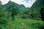 Agricultural lands in Roseau River Valley on Isle of Dominica, West Indies, AGPix_0844