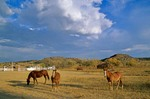 Horses at Hitching Post Ranch, autumn in the Cimarron Valley near Kenton, Oklahoma, AGPix_0876