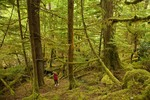 Hiker amid old growth temperate rainforest at Fanny Creek on Moresby Island in Gwaii Haanas National Park Reserve, in the Queen Charlotte Islands of British Columbia, Canada, AGPix_0922