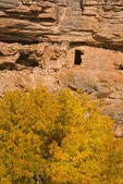 Ruins of ancient Indian Cliff Dwelling and Velvet Ash tree in autumn color, below rim of Montezuma Well a unit of Montezuma Castle National Monument, Arizona, AGPix_0948
