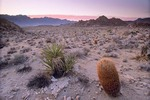 Barrel Cactus in Colton Hills area with Providence Mountains in background, Mojave National Preserve, California, AGPix_0958