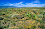 Semi-desert grassland vegetation on Perry Mesa near Lousy Canyon in Agua Fria National Monument, Arizona, AGPix_1020