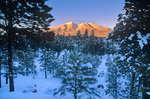 Winter sunset on San Francisco Peaks, viewed from Ponderosa pine forest, Flagstaff, Arizona, AGPix_1035