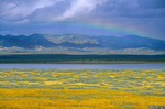 Rainbow over Soda Dry Lake and field of Coreopsis flowers with Temblor Range in back, Carrizo Plain National Monument, west of Bakersfield, California, AGPix_1038