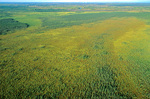 Aerial view of Big Bog, the largest peat bog in lower 48 states, Patterned Peatlands in Pine Island State Forest, Koochiching County in northwest Minnesota, AGPix_1042