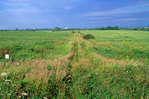 Former rural road and farmlands now restored tallgrass prairie, at Neal Smith National Wildlife Refuge, 7/22/04 near Prairie City, Iowa, IA-11829, AGPix_1063