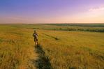 Hiker on Prairie Nature Trail at Tallgrass Prairie National Preserve, in Flint Hills near Strong City, Kansas, KS_00802, AGPix_1086.tif