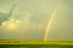 Rainbow after storm, over hayfield along Highway 160 near Sitka, Kansas, KS_00838, AGPix_1087.tif