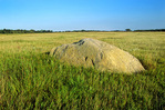 Glacial erratic boulder, a reminder of the Ice Age, visible on prairie at Lac Qui Parle State Wildlife Area near Appelton, Minnesota, MN_00905, AGPix_1089