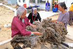 Navajo Indian women evaluate quality of a fleece form a Navajo-churro sheep, during a wool buy at Hardrock Chapter House, Navajo Nation, Arizona, AGPix_1104